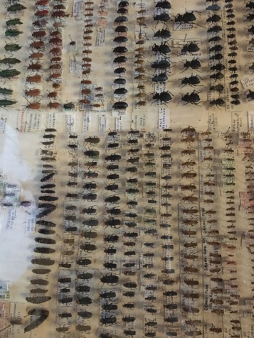 More Bugs collected by a prior owner of the Chateau